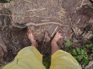 Barefoot-In-The-Jungle