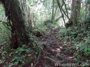 Cameron-Highlands-Jungle-1 (Large)