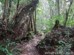 Cameron-Highlands-Jungle
