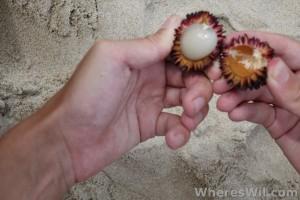 Opening-Pulasan-Fruit