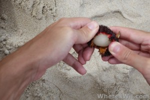 Peeling-Pulasan-Fruit
