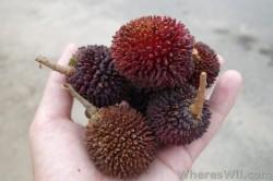 Pulasan-Fruit