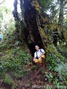 Wil-Cameron-Highlands-Malaysia-Jungle