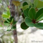 Bako-macro-plant