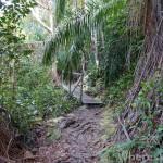 Bako-trail