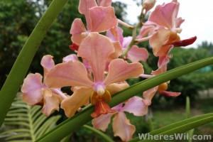 Kuching-Orchid-Park