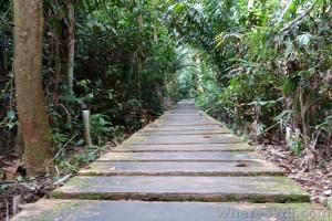 bako-path